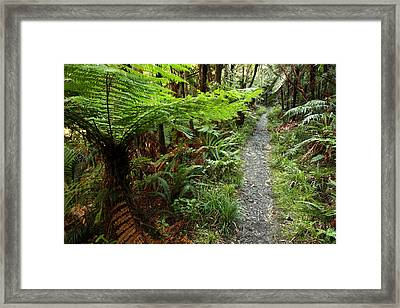 New Zealand Forest Framed Print by Les Cunliffe