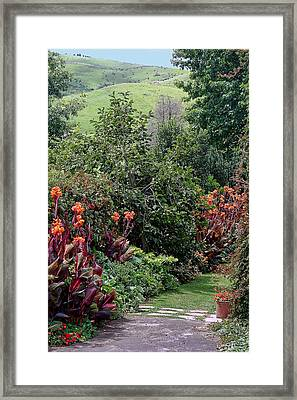 New Zealand Gaden Pathway Framed Print by Linda Phelps