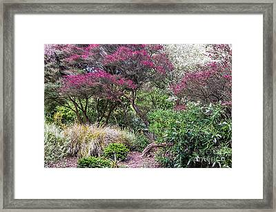 New Zealand Tea Tree II Framed Print