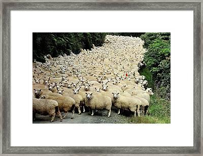 New Zealand Traffic Jam Framed Print