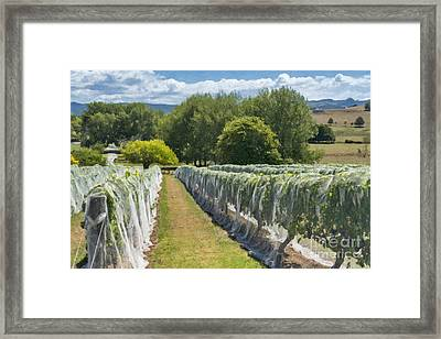 New Zealand Winery Framed Print