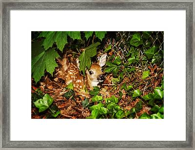 Framed Print featuring the photograph Newborn Fawn  by Eleanor Abramson