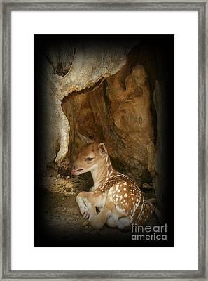 Newborn Fawn Framed Print by Sara  Raber