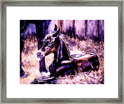 Newborn Foal Framed Print by Stan Esson