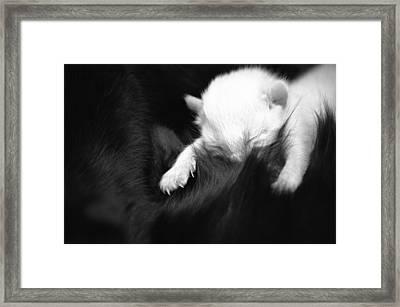 Newborn Kitten Framed Print