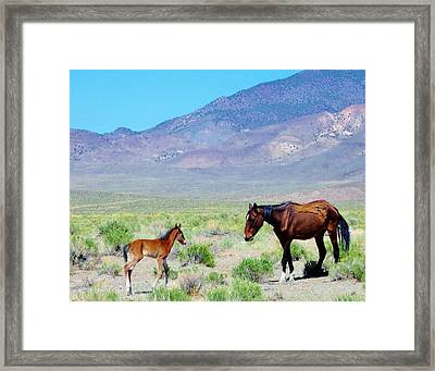 Framed Print featuring the photograph Newborn Mustang Foal by Marilyn Diaz