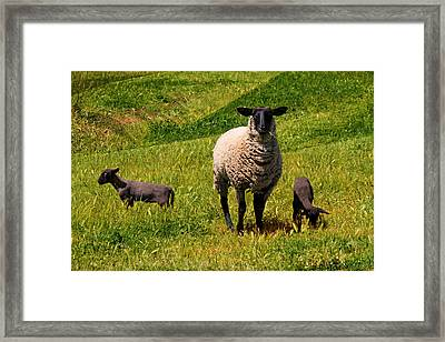 Newborn Twins Framed Print