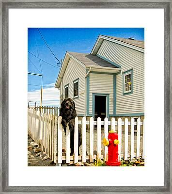 Newfoundland Dog In Newfoundland Framed Print