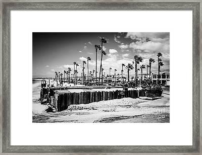 Newport Beach Dory Fishing Fleet Black And White Picture Framed Print by Paul Velgos