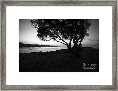 Newport Beach Jetty Tree Black And White Photo Framed Print by Paul Velgos