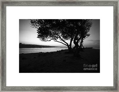 Newport Beach Jetty Tree Black And White Photo Framed Print