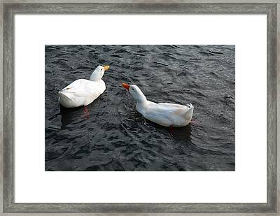 Framed Print featuring the photograph News Travels Fast by Lena Wilhite