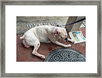 Newsworthy Dog In French Quarter Framed Print by Kathleen K Parker