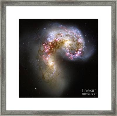 Ngc 4038ngc 4039 Antennae Galaxies Framed Print by Science Source