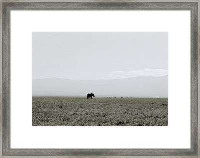 Ngorongoro Crater Framed Print by Shaun Higson