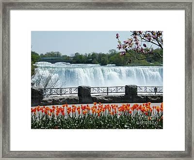 Niagara - Springtime Tulips Framed Print by Phil Banks