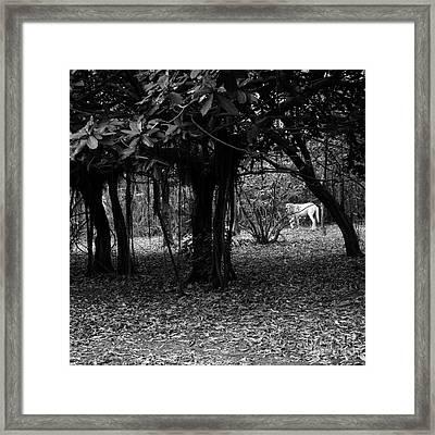 Nicaragua-fineart-23 Framed Print by Javier Ferrando