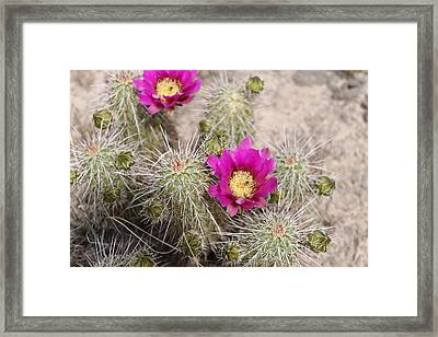 Nice And Prickly Framed Print by Gerald Dobbin