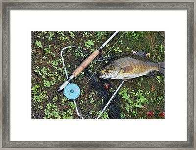 Nice Bass Framed Print