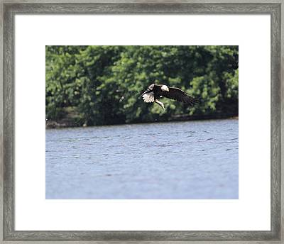 Nice Catch Framed Print