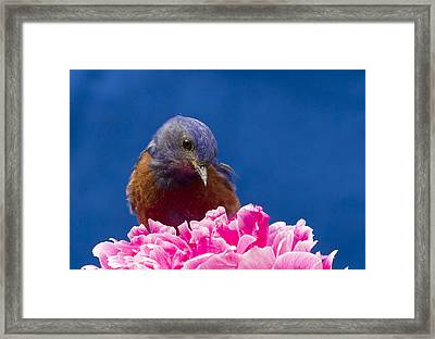 Nice Flower Framed Print by Jean Noren