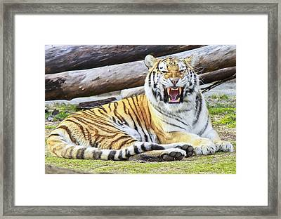 Nice Kitty Framed Print by Michael Petrick