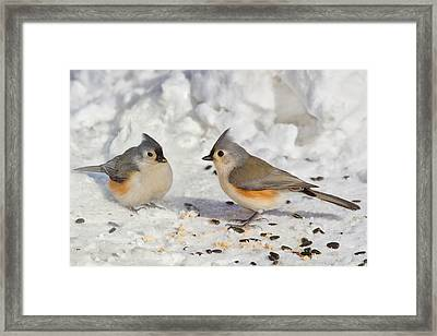 Nice Pair Of Titmice Framed Print
