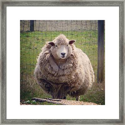 Nice To Meet Ewe Framed Print