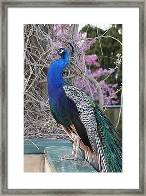 Nice To Meet You Framed Print by Vadim Levin