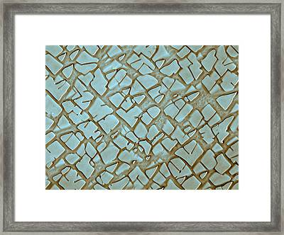 Nickel Alloy, Sem Framed Print by Omikron