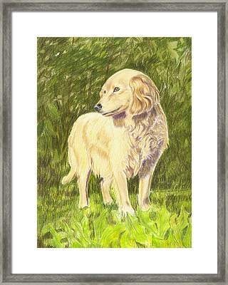 Nicky Framed Print by Ruth Seal