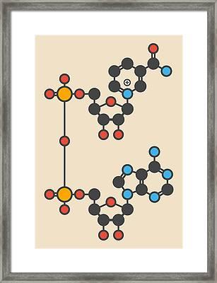 Nicotinamide Molecule Framed Print by Molekuul