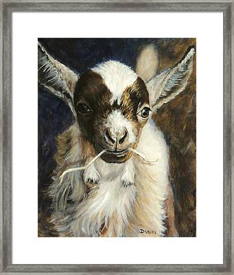 Nigerian Dwarf Goat With Straw Framed Print