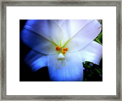Night And Day Lilly  Framed Print