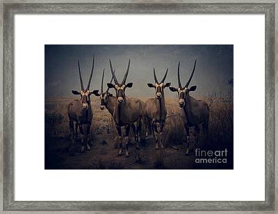 Night At The Museum Framed Print by Edward Fielding