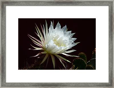 Framed Print featuring the photograph Night Beauty by Cindy McDaniel