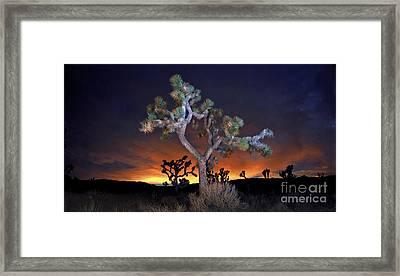 Night Bloom Framed Print