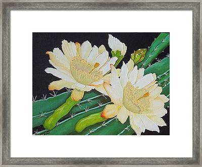 Night Blooming Cacti Framed Print by Carol Sabo