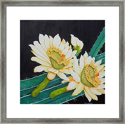 Night Blooming Cactus Framed Print by Carol Sabo