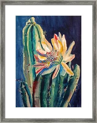 Night Blooming Cactus Framed Print by Carolyn Jarvis