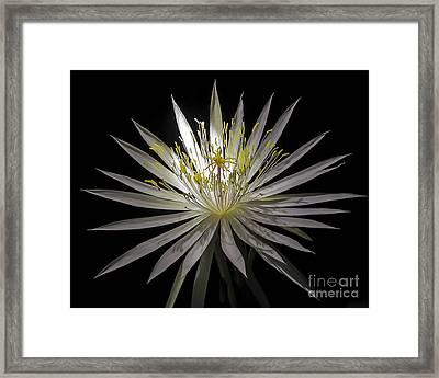 Night-blooming Cereus 1 Framed Print