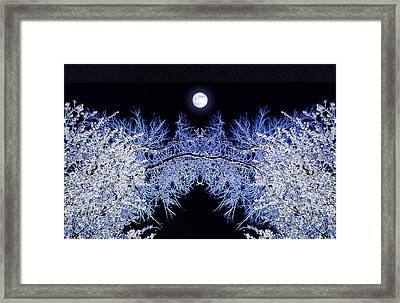 Night Blooms Framed Print