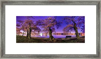 Night Blossoms 2014 Framed Print by Metro DC Photography