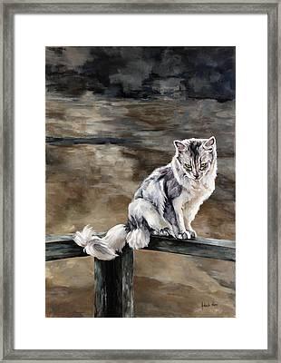 Night Cat Framed Print by Jolante Hesse