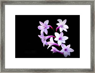 Framed Print featuring the photograph Night Color by AJ  Schibig