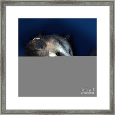 Night Creature Framed Print by Betty LaRue
