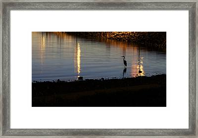Framed Print featuring the photograph Night Fishing - A Great Blue Heron  by Jane Eleanor Nicholas