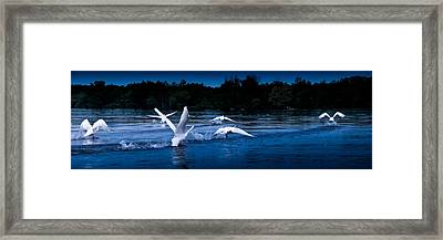 Framed Print featuring the photograph Night Flight   by Lars Lentz