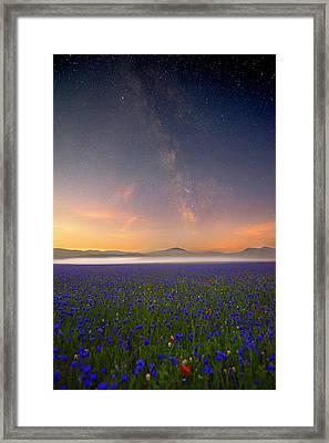 Night Flowers Framed Print