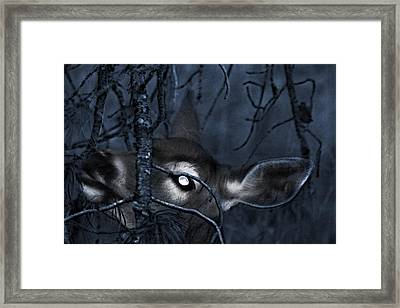 Framed Print featuring the photograph Night Grazing by Janie Johnson